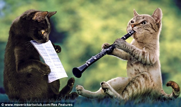 What is that, it's a cat, on the Clarinet!